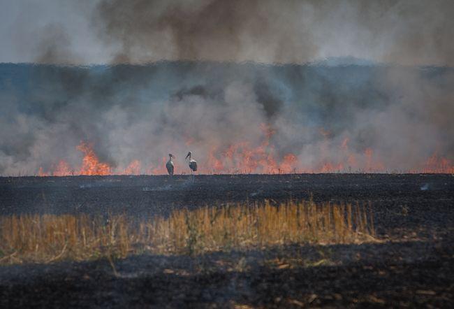 Критическая ситуации с пожарами в Украине