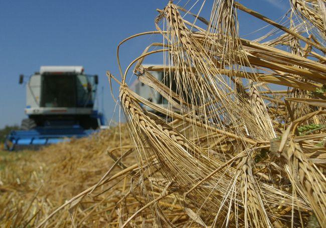 Украина намолотила 1,5 млн тонн ранних зерновых изернобобовых культур
