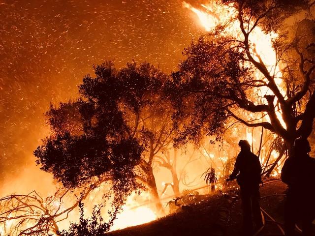 Площадь пожара «Томас» вКалифорнии достигла практически 950 кв. км