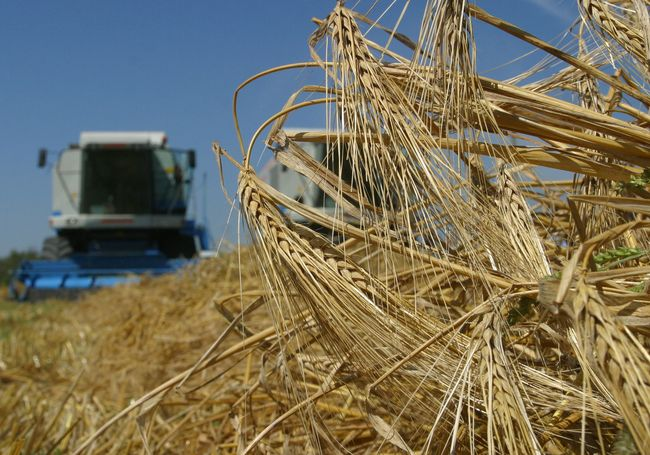 В Российской Федерации прогнозируется рекордный урожай зерна современ СССР