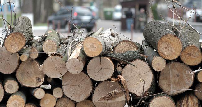Офицеров подозревают ввырубке леса свывозом вСловакию— Обыск уПогранслужбы