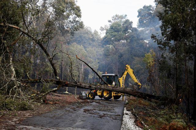 Руководитель МВД Португалии ушла вотставку из-за пожаров