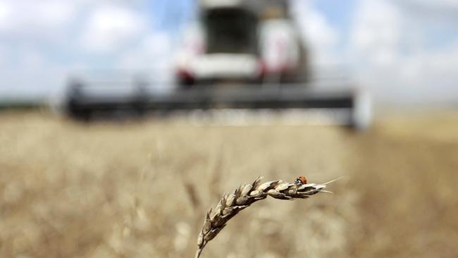 Украина экспортировала 17 млн тонн зерновых