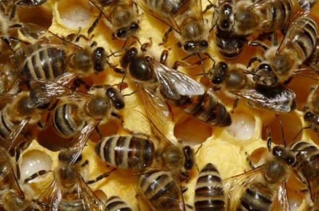 ВЕС назвали изапретили пестициды, которые убивают пчел